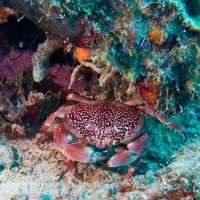 Scuba Dive Gros Pitons Reef St Lucia